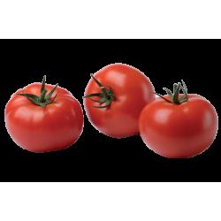 Tomate campari extra bio