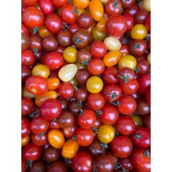 Tomate cerise mix bio