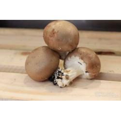 Champignons de paris brun bio