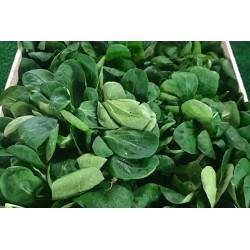 Salade mache bio